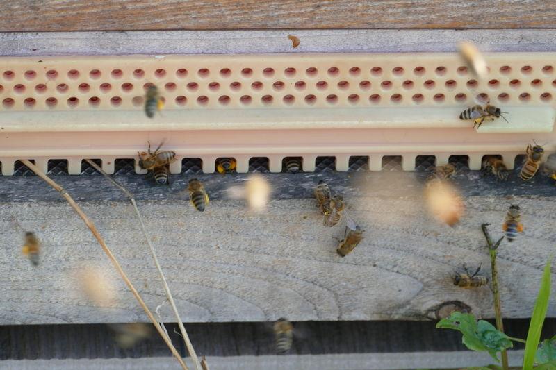 La ruche Alalaosy