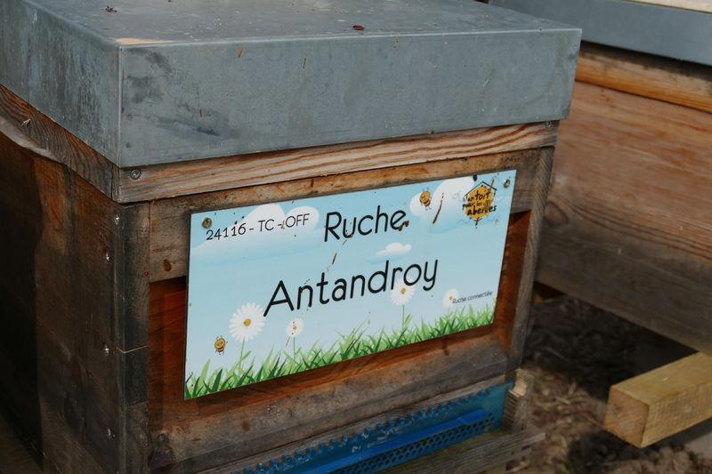 La ruche Antandroy
