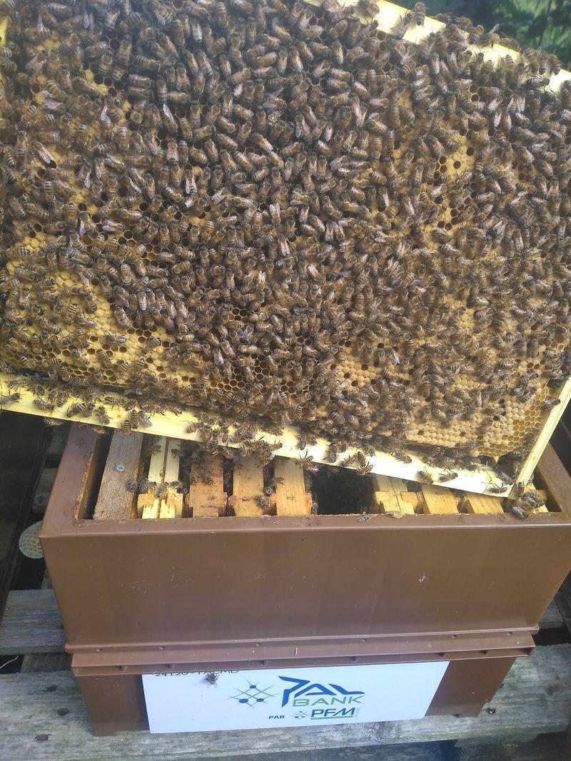 La ruche PFM-Solutions