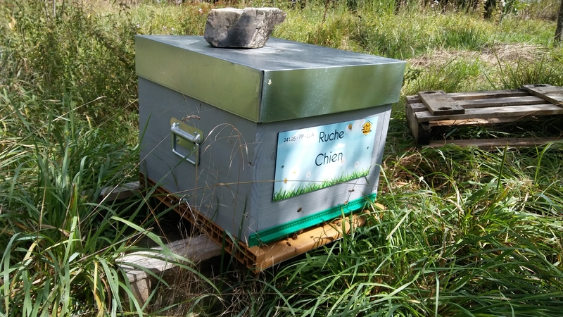 La ruche Chien