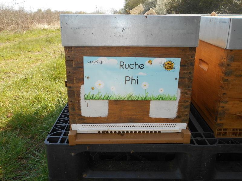 La ruche Phi