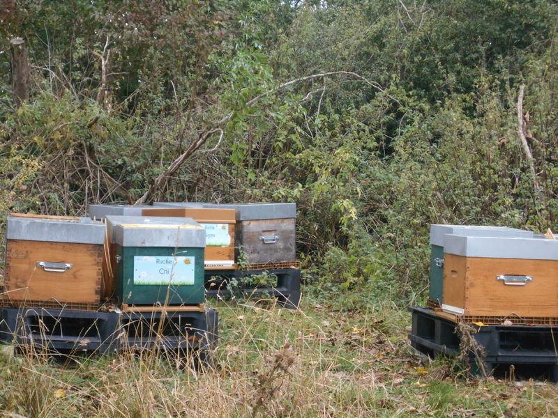 La ruche Chi