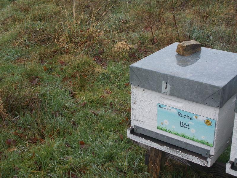 La ruche Bêt