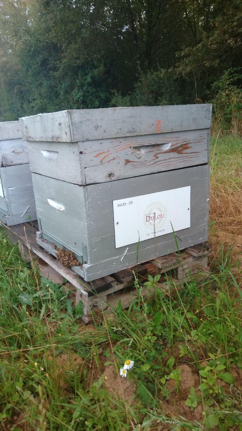 La ruche Maison Dulou Traiteur
