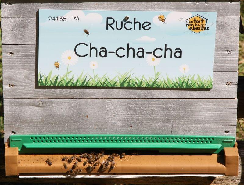 La ruche Cha-cha-cha