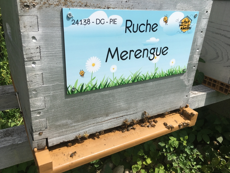 La ruche Merengue