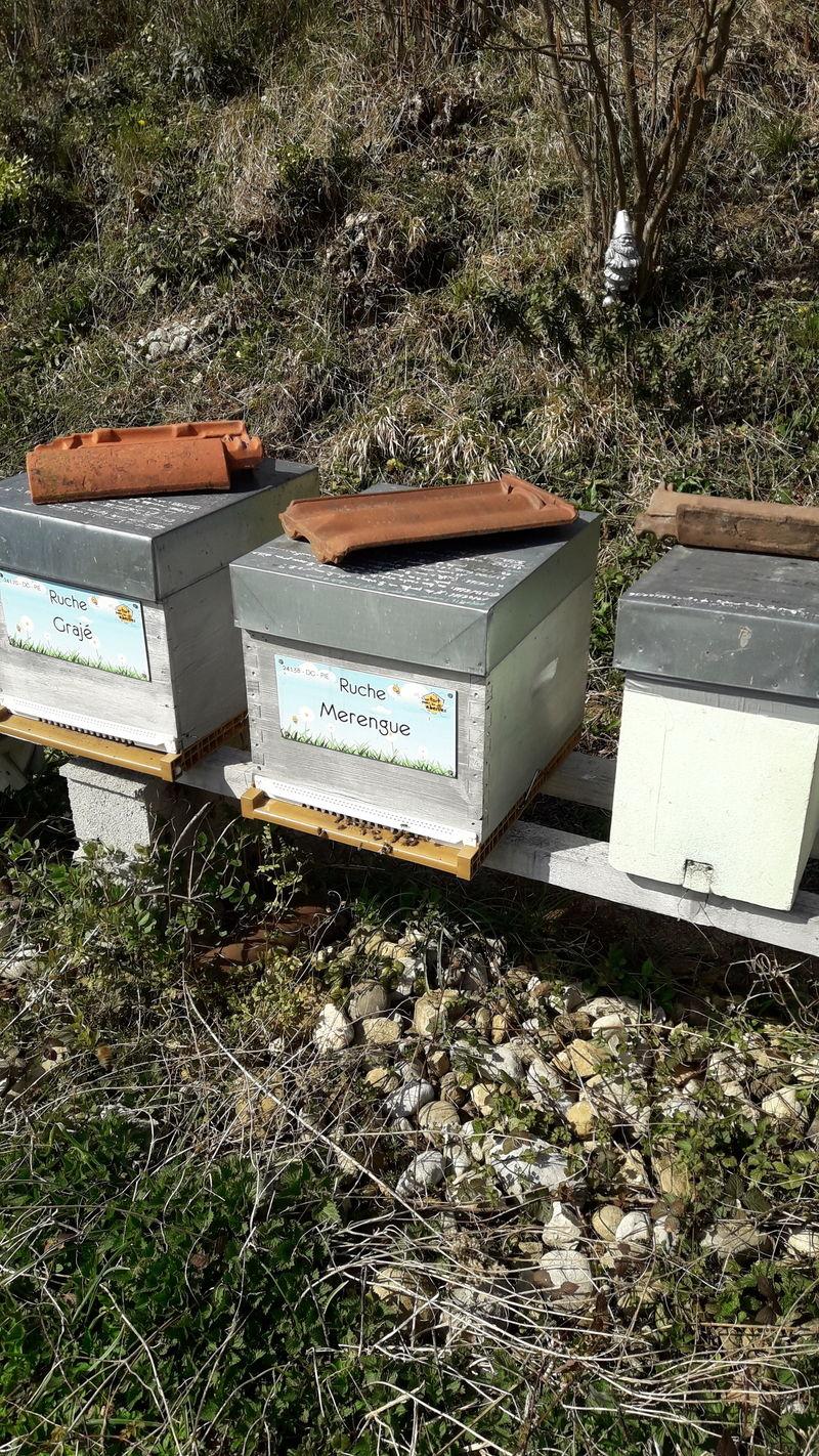 La ruche Merengue