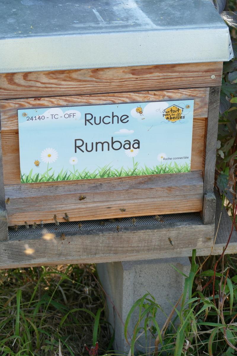 La ruche Rumbaa
