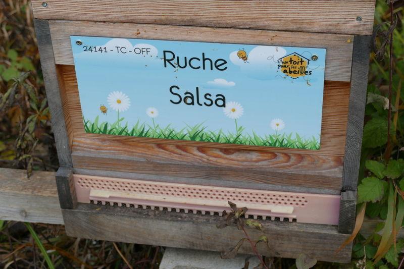 La ruche Salsa