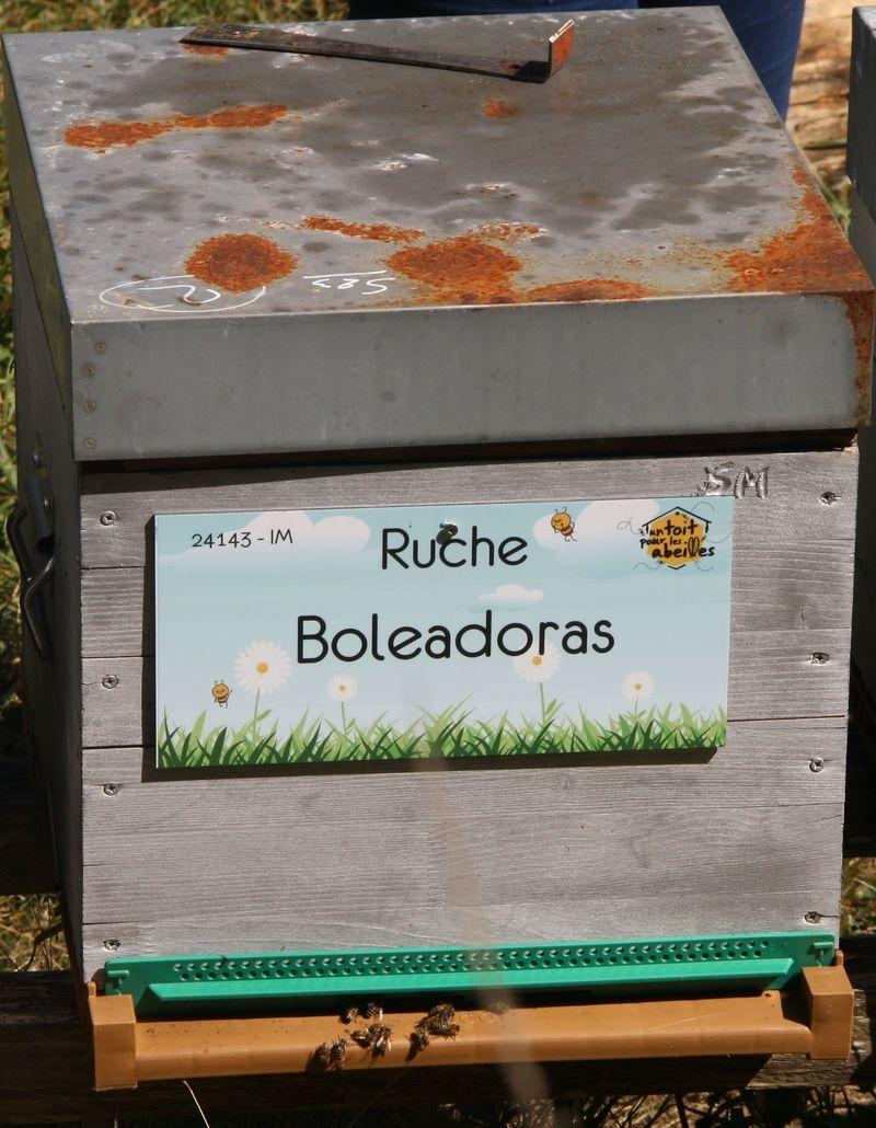 La ruche Boleadoras
