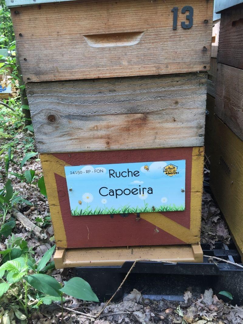 La ruche Capoeira