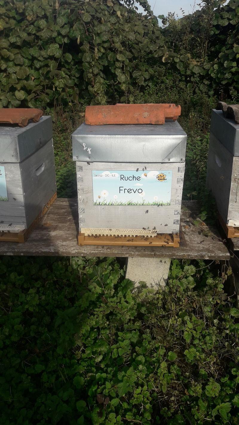 La ruche Frevo
