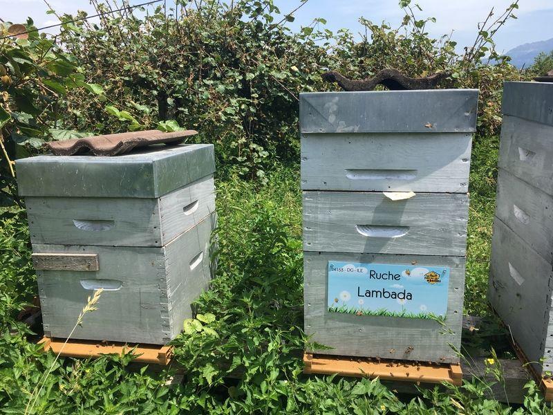 La ruche Lambada