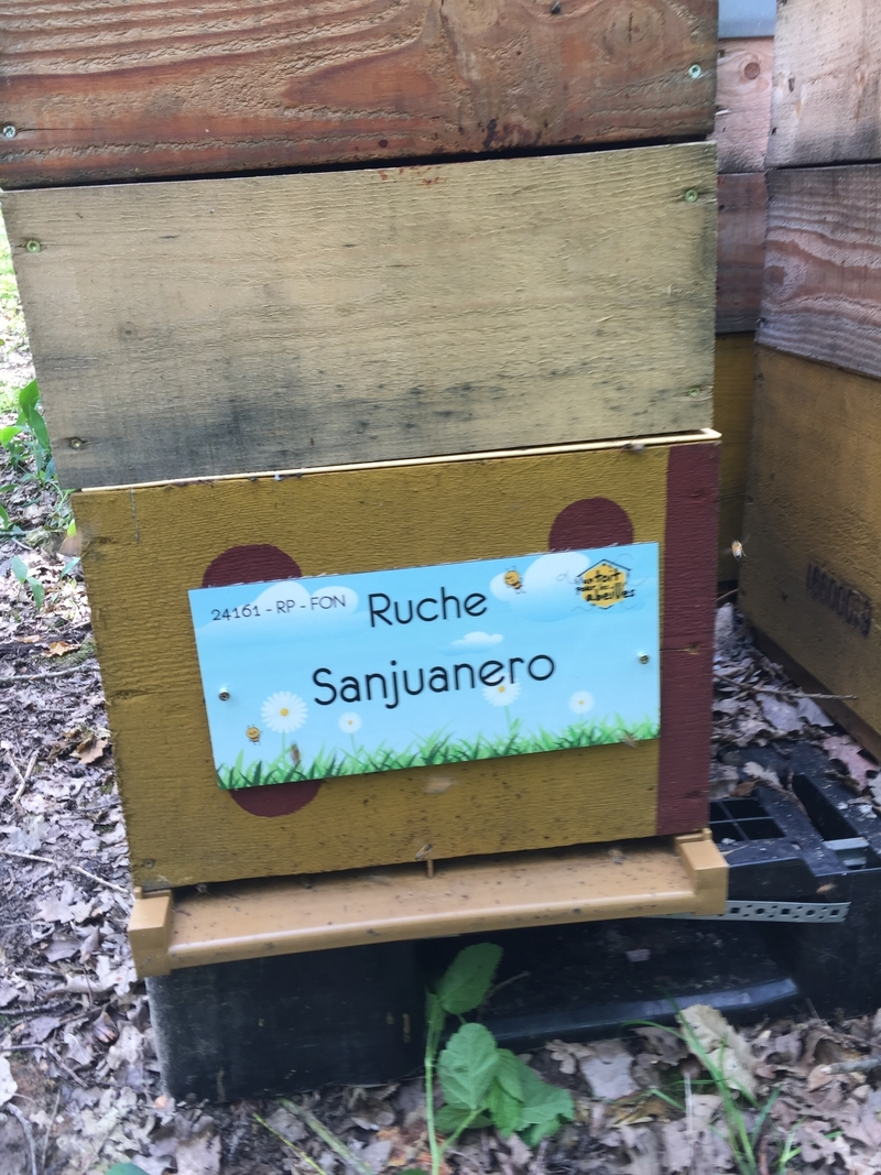 La ruche Sanjuanero