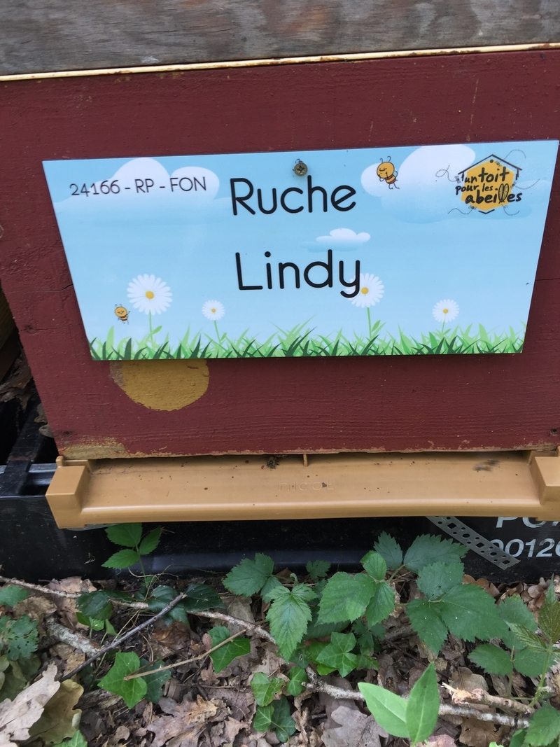 La ruche Lindy