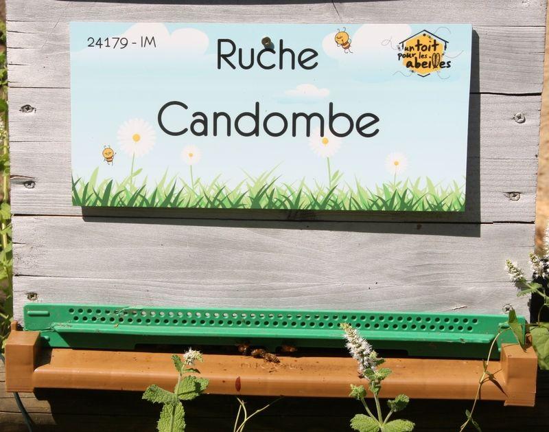 La ruche Candombe