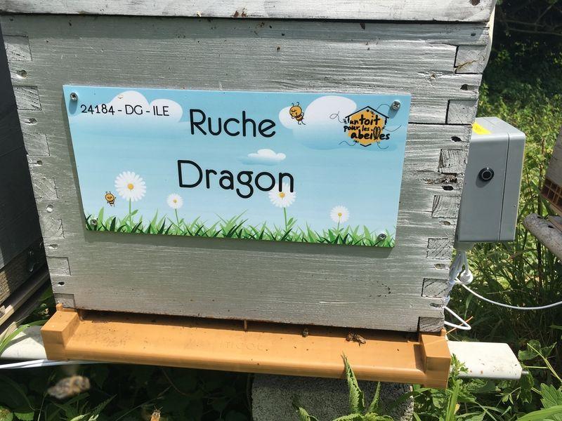 La ruche Dragon