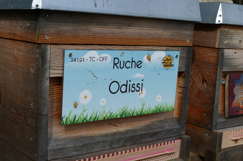 La ruche Odissi