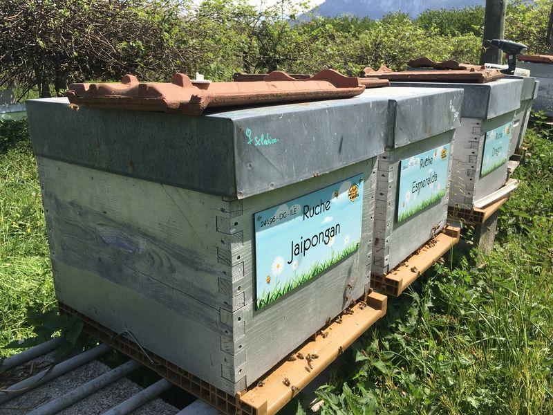 La ruche Jaipongan