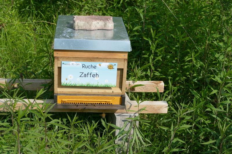 La ruche Zaffeh