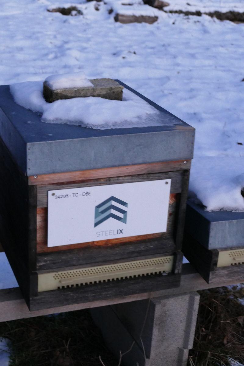 La ruche Steelix/ echelle européenne 67