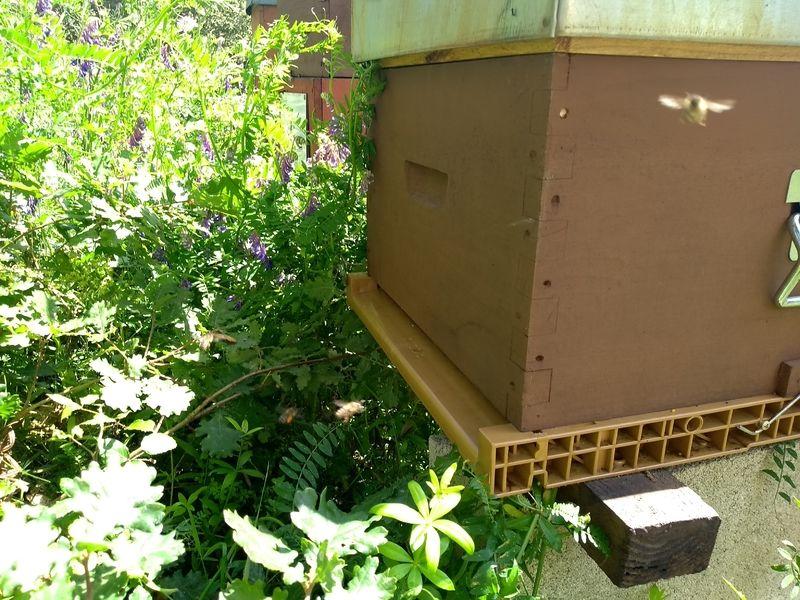 La ruche Frassu
