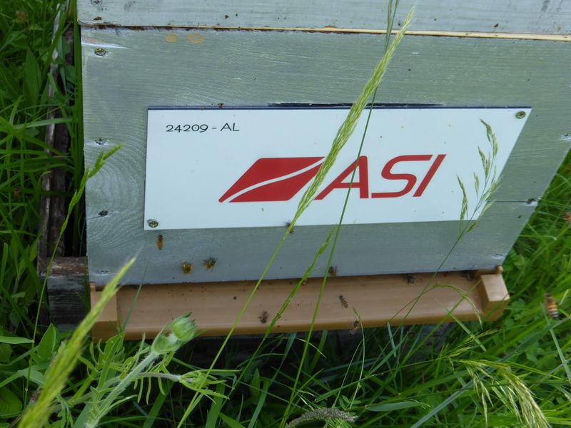 La ruche ASI
