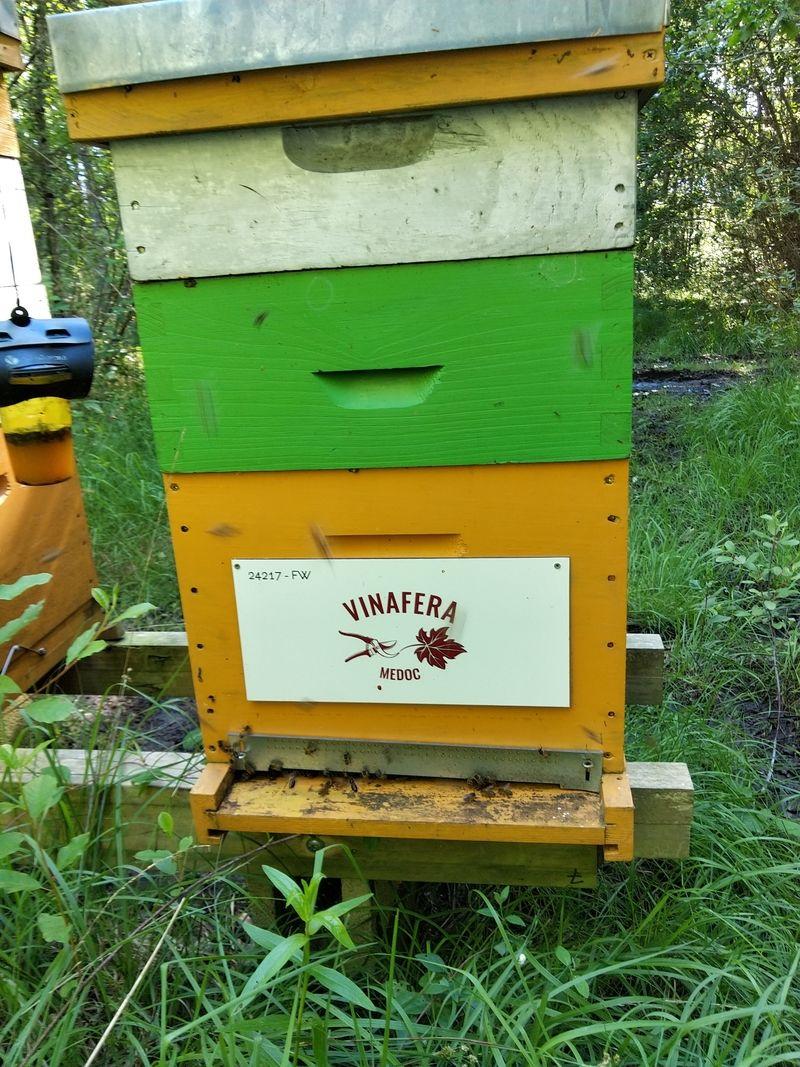 La ruche Vinafera medoc