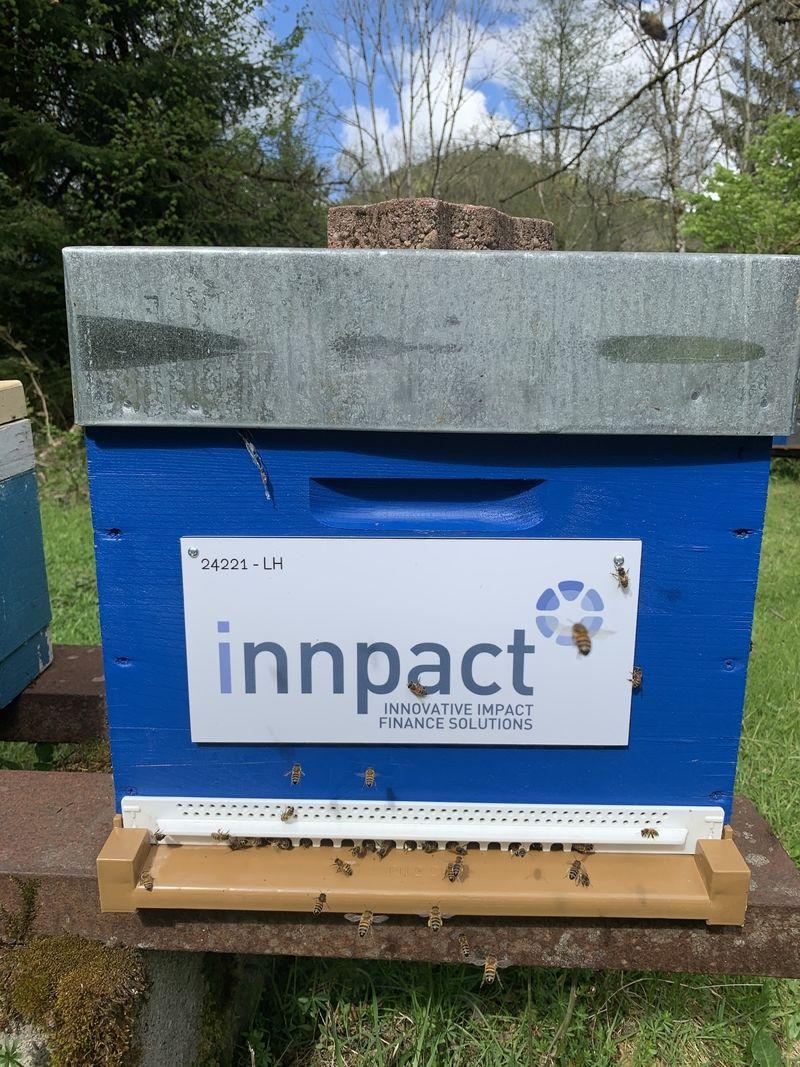 La ruche Innpact