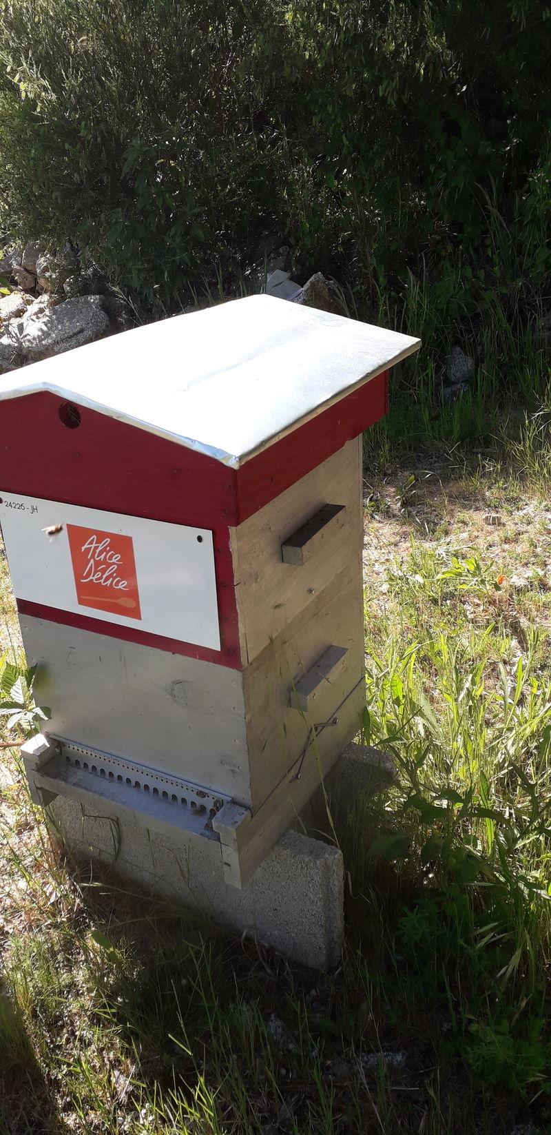 La ruche Alice Délice Bercy