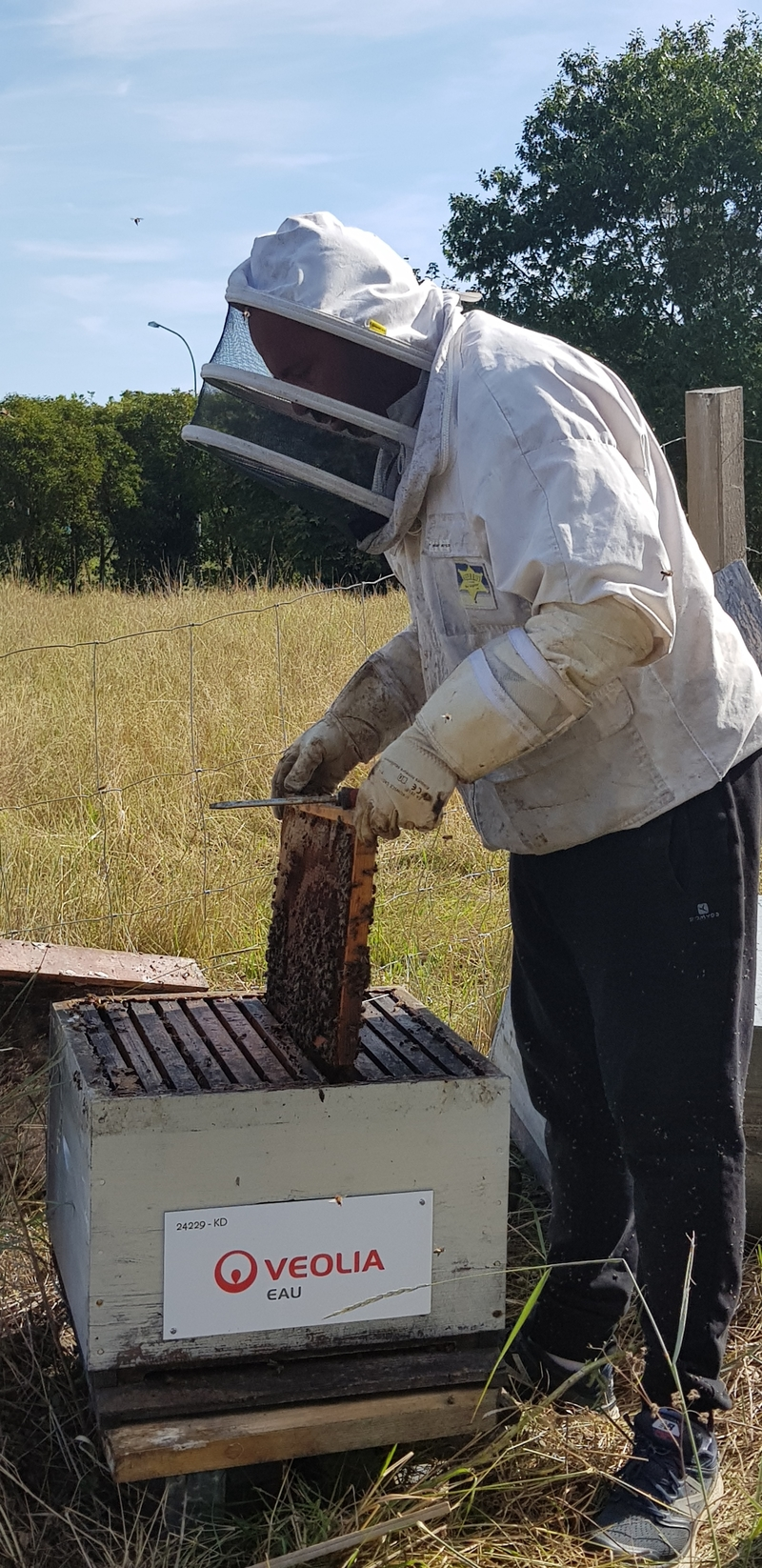 La ruche VEOLIA EAU