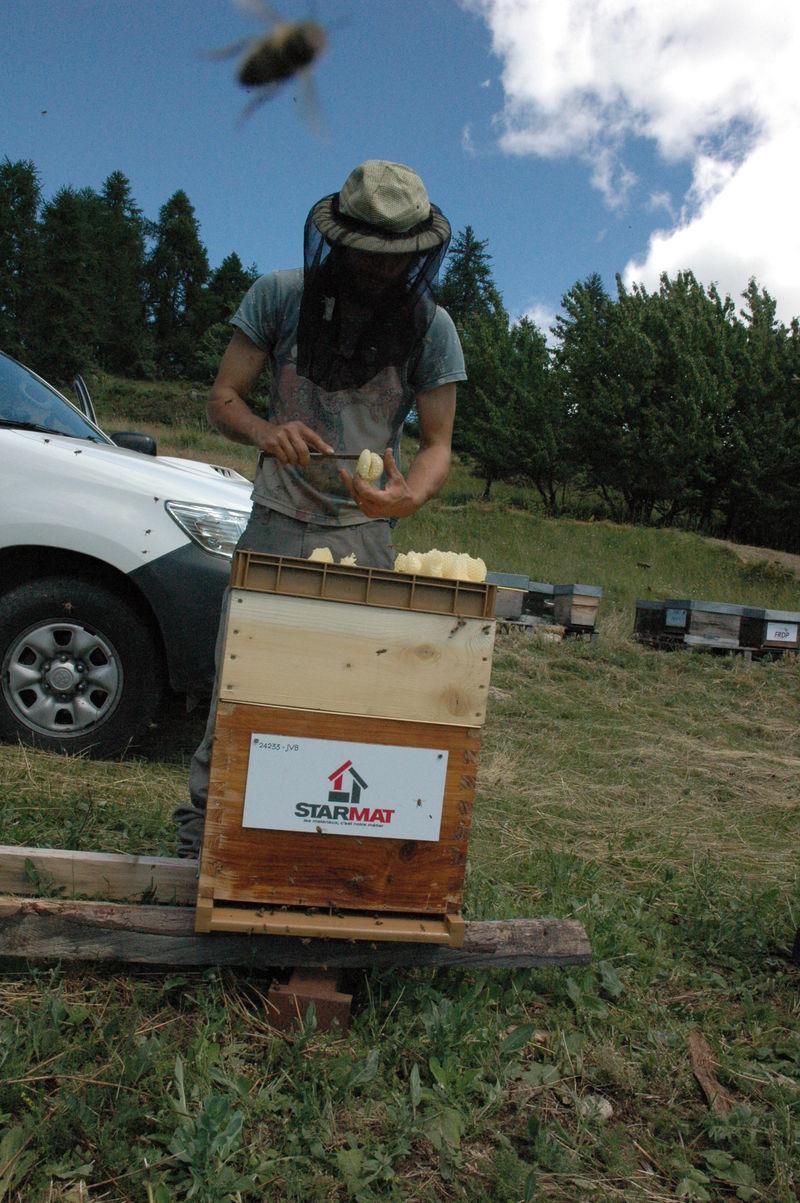 La ruche Starmat