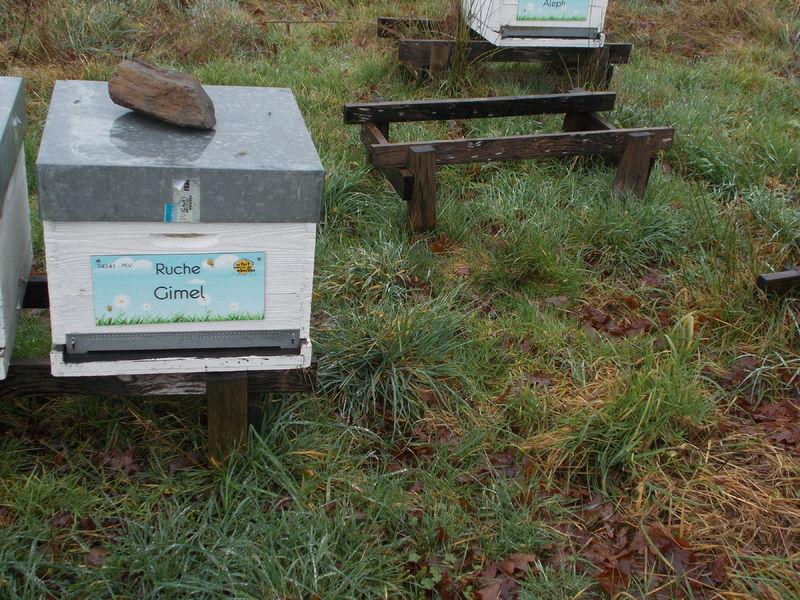 La ruche Gimel