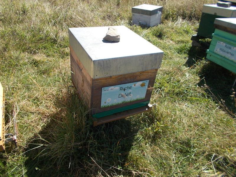La ruche Dalet