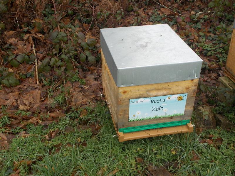 La ruche Zaïn
