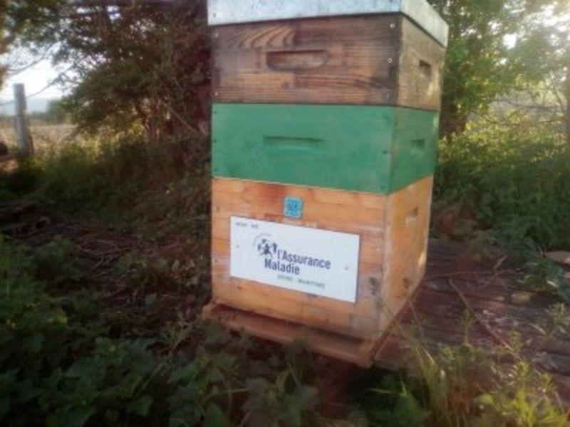 La ruche Cpam de seine maritime