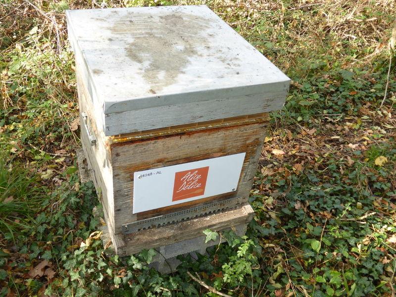 La ruche Alice Délice Meaux