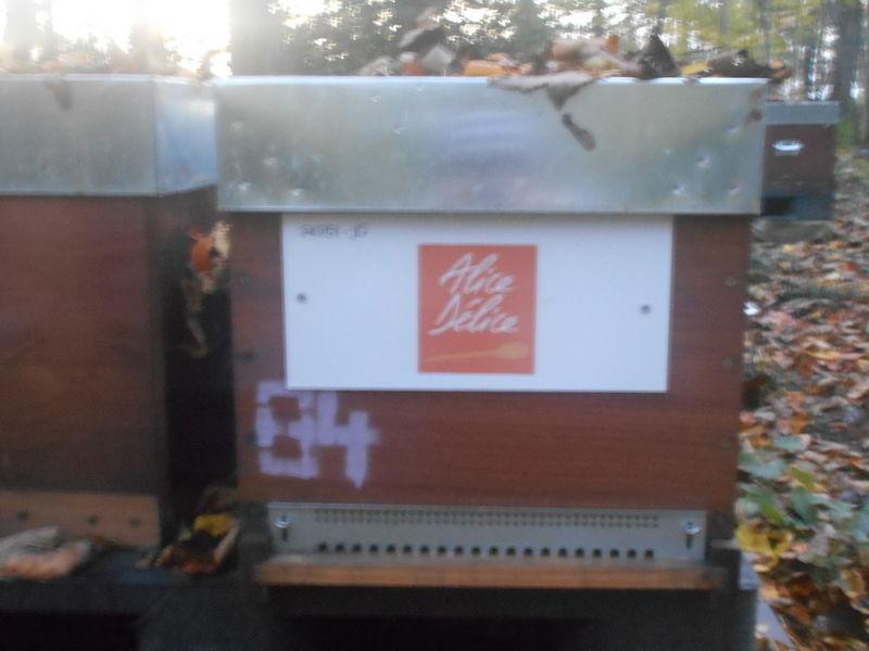 La ruche Alice Délice Amiens