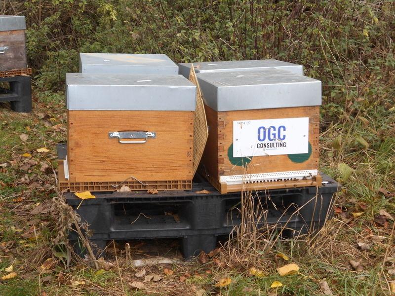 La ruche OGC Consulting