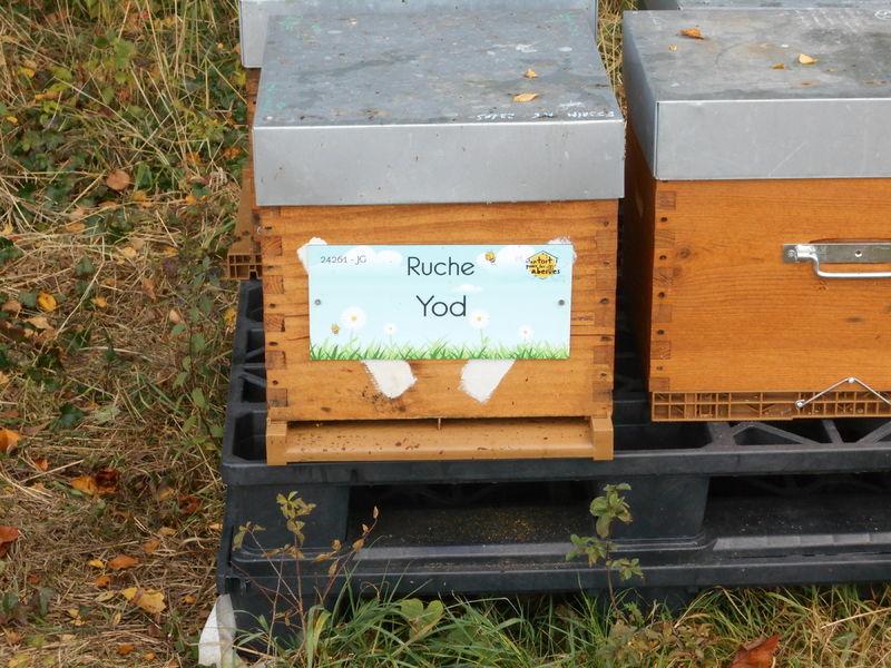 La ruche Yod