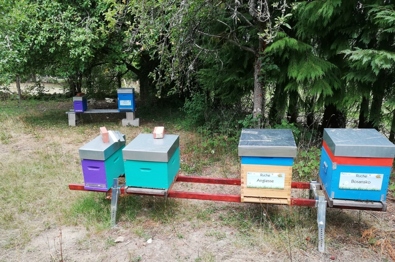 La ruche Anglesse
