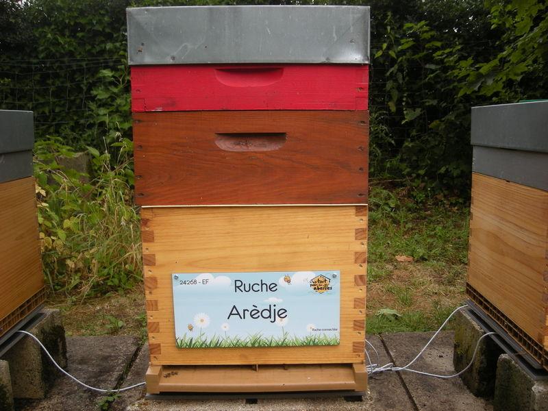 La ruche Arèdje