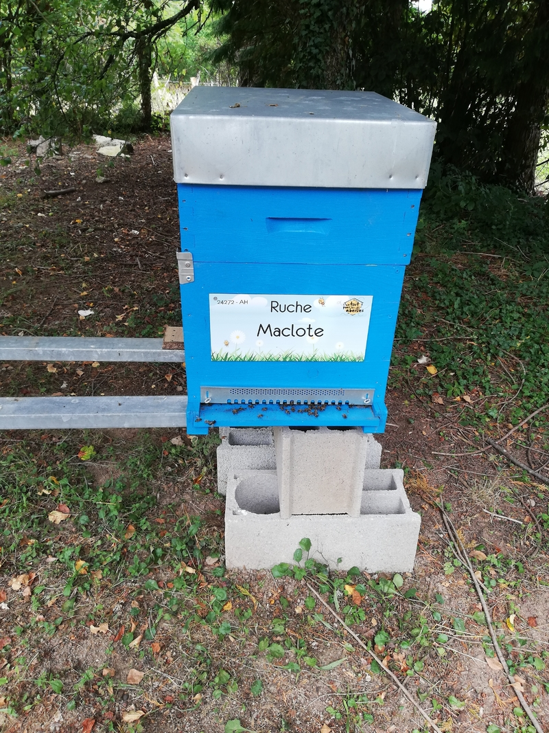La ruche Maclote