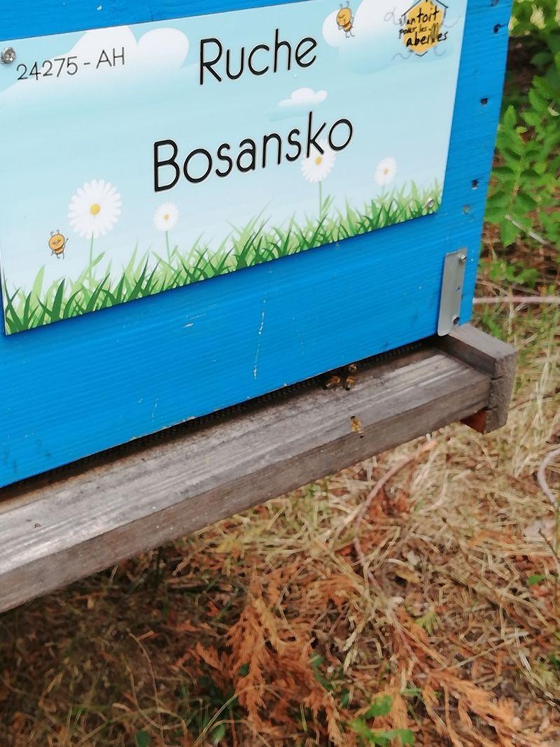 La ruche Bosansko