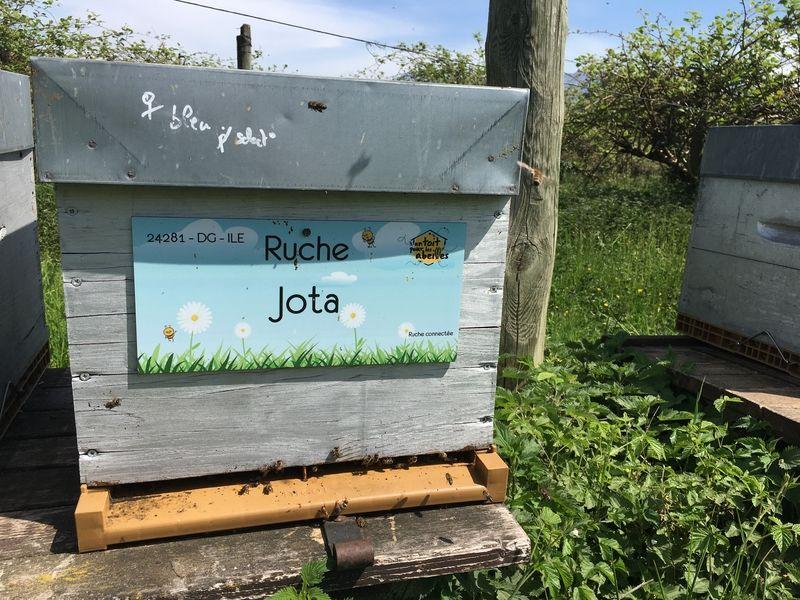 La ruche Jota