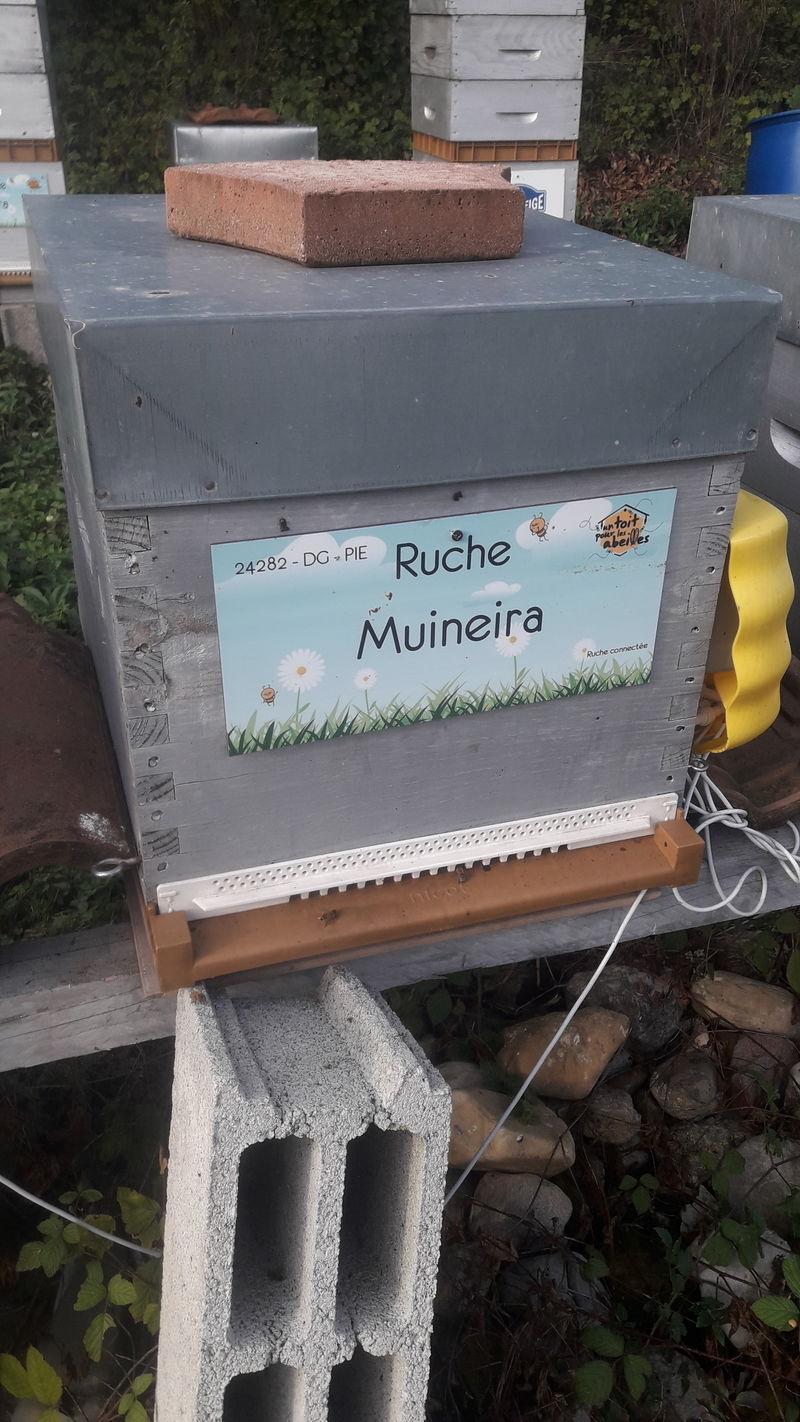 La ruche Muineira