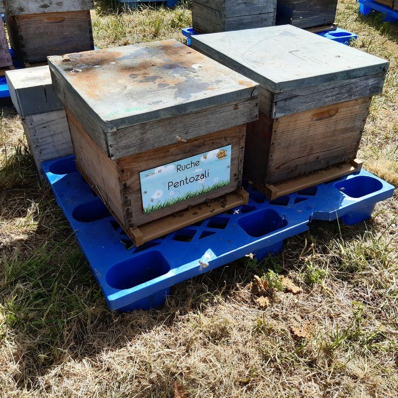 La ruche Pentozali