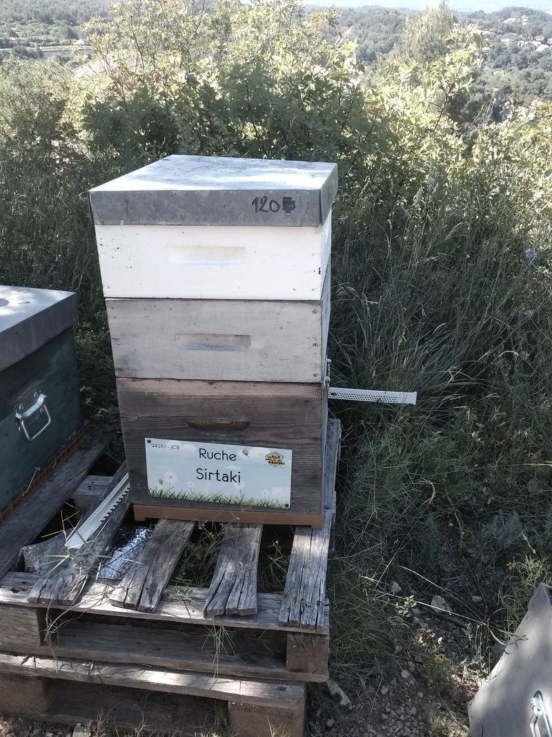 La ruche Sirtaki