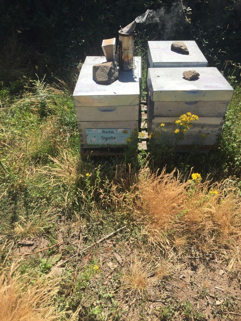 La ruche Sousta