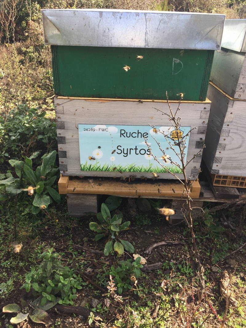 La ruche Syrtos